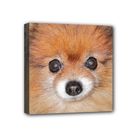 Pomeranian Mini Canvas 4  x 4