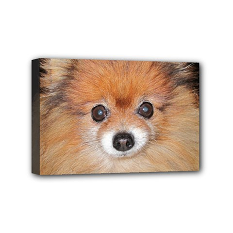 Pomeranian Mini Canvas 6  x 4