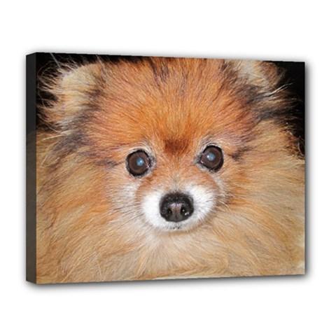 Pomeranian Canvas 14  x 11