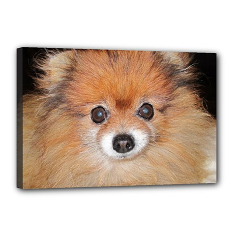 Pomeranian Canvas 18  x 12