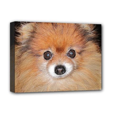 Pomeranian Deluxe Canvas 16  x 12