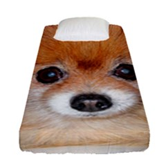 Pomeranian Fitted Sheet (Single Size)