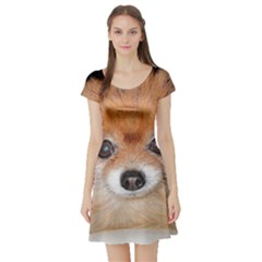 Pomeranian Short Sleeve Skater Dress