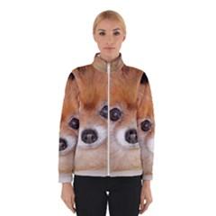 Pomeranian Winterwear