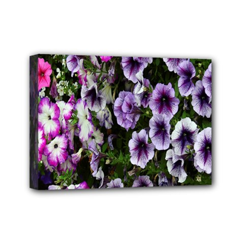 Flowers Blossom Bloom Plant Nature Mini Canvas 7  x 5