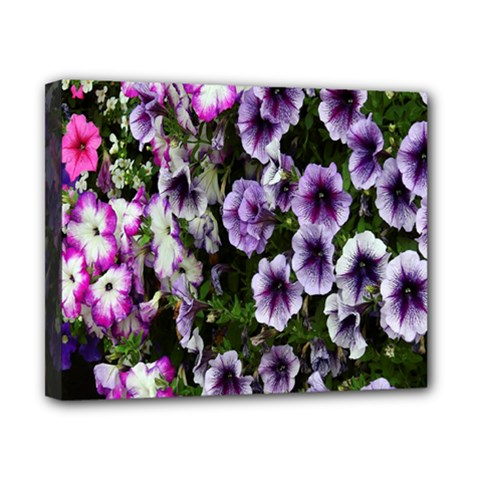 Flowers Blossom Bloom Plant Nature Canvas 10  x 8