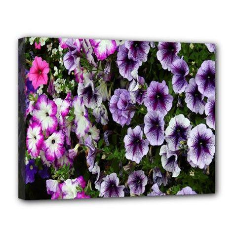 Flowers Blossom Bloom Plant Nature Canvas 14  x 11