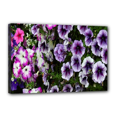 Flowers Blossom Bloom Plant Nature Canvas 18  x 12