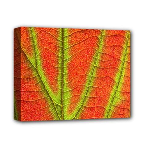 Unique Leaf Deluxe Canvas 14  x 11
