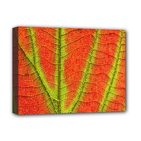 Unique Leaf Deluxe Canvas 16  x 12