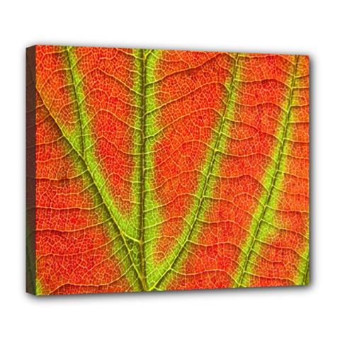 Unique Leaf Deluxe Canvas 24  x 20