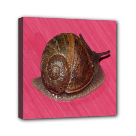 Snail Pink Background Mini Canvas 6  x 6