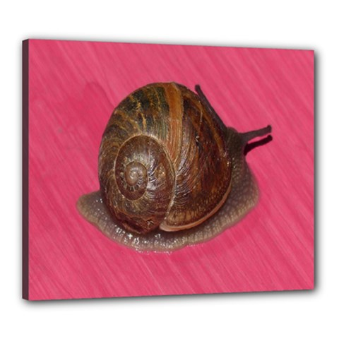Snail Pink Background Canvas 24  x 20