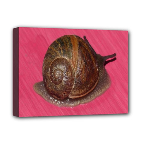 Snail Pink Background Deluxe Canvas 16  x 12