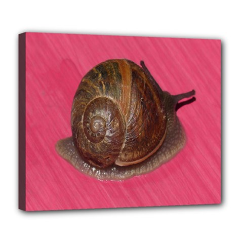 Snail Pink Background Deluxe Canvas 24  x 20