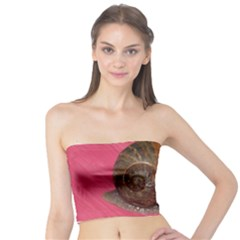 Snail Pink Background Tube Top