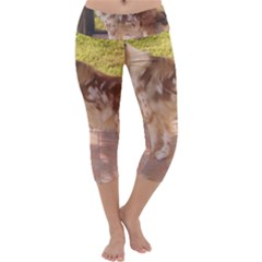 Australian Shepherd Red Merle Full Capri Yoga Leggings