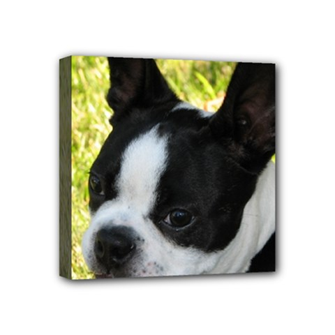 Boston Terrier Puppy Mini Canvas 4  x 4