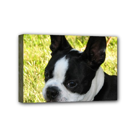Boston Terrier Puppy Mini Canvas 6  x 4