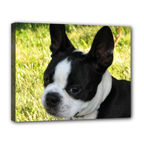 Boston Terrier Puppy Canvas 14  x 11