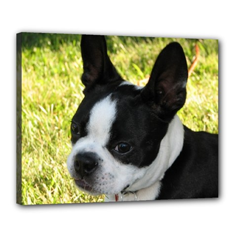 Boston Terrier Puppy Canvas 20  x 16