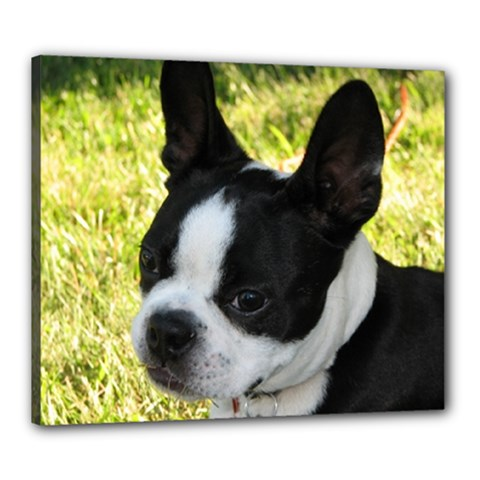 Boston Terrier Puppy Canvas 24  x 20