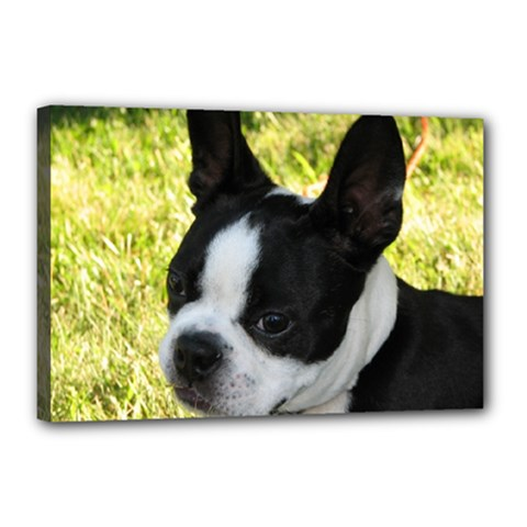 Boston Terrier Puppy Canvas 18  x 12