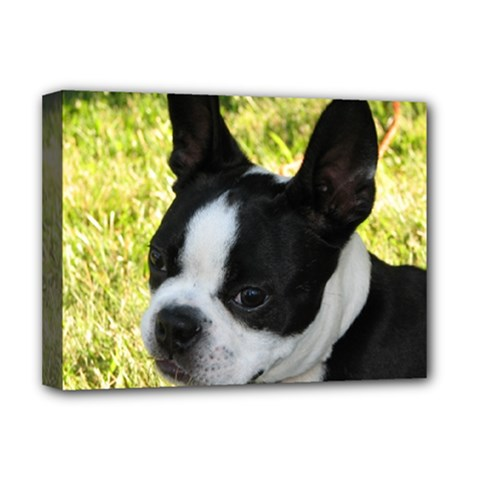 Boston Terrier Puppy Deluxe Canvas 16  x 12