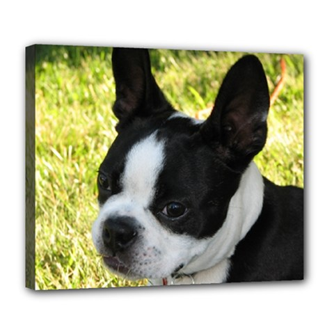 Boston Terrier Puppy Deluxe Canvas 24  x 20
