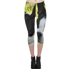 Boston Terrier Puppy Capri Leggings