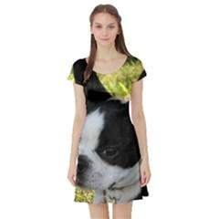 Boston Terrier Puppy Short Sleeve Skater Dress
