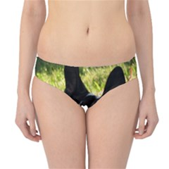 Boston Terrier Puppy Hipster Bikini Bottoms