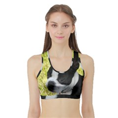 Boston Terrier Puppy Sports Bra with Border
