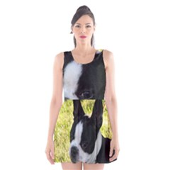 Boston Terrier Puppy Scoop Neck Skater Dress