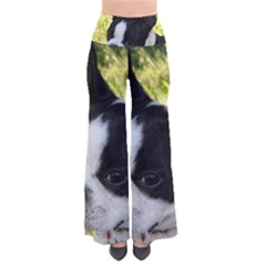 Boston Terrier Puppy Pants
