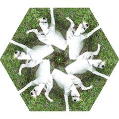 Boxer White Puppy Full Mini Folding Umbrellas