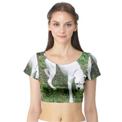 Boxer White Puppy Full Short Sleeve Crop Top (Tight Fit)