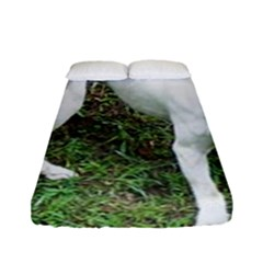 Boxer White Puppy Full Fitted Sheet (Full/ Double Size)