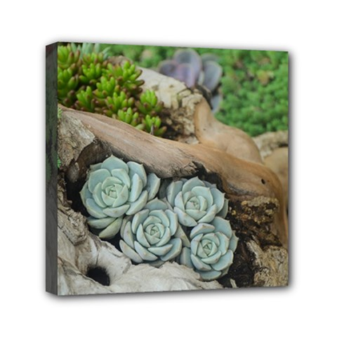 Plant Succulent Plants Flower Wood Mini Canvas 6  x 6