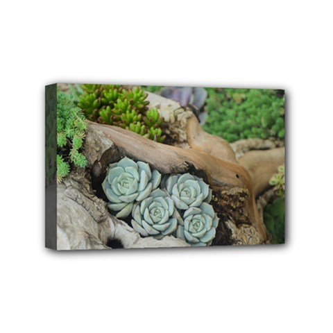 Plant Succulent Plants Flower Wood Mini Canvas 6  x 4