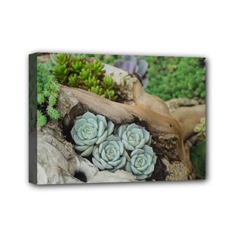 Plant Succulent Plants Flower Wood Mini Canvas 7  x 5