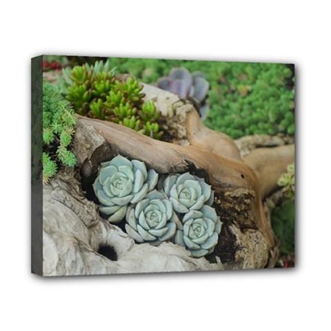 Plant Succulent Plants Flower Wood Canvas 10  x 8