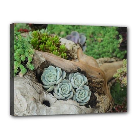 Plant Succulent Plants Flower Wood Canvas 16  x 12