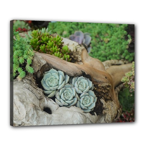 Plant Succulent Plants Flower Wood Canvas 20  x 16