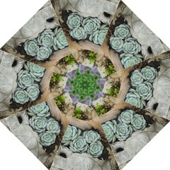 Plant Succulent Plants Flower Wood Straight Umbrellas