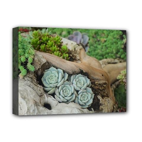 Plant Succulent Plants Flower Wood Deluxe Canvas 16  x 12