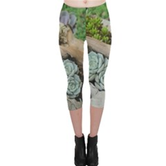 Plant Succulent Plants Flower Wood Capri Leggings