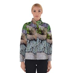 Plant Succulent Plants Flower Wood Winterwear