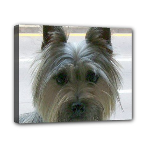 Cairn Terrier Canvas 10  x 8