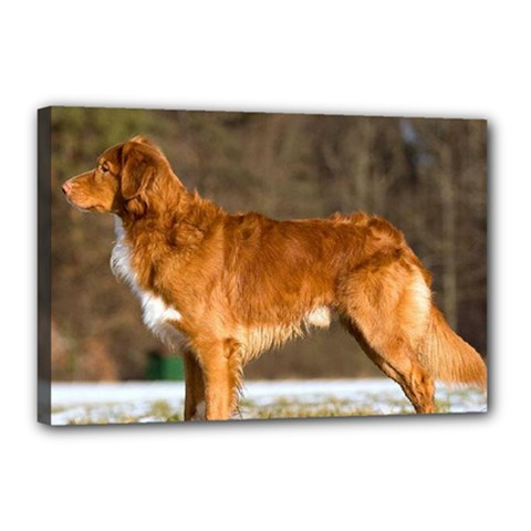 Duck Toller Full Canvas 18  x 12